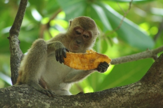 Hmm.. how do I eat this? (Picture Courtesy - https://www.behance.net/saraahmed15069)